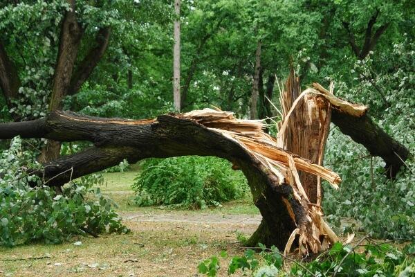 Sturmschaden - umgestürzter Baum