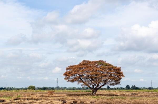 Trockenheit im Herbst