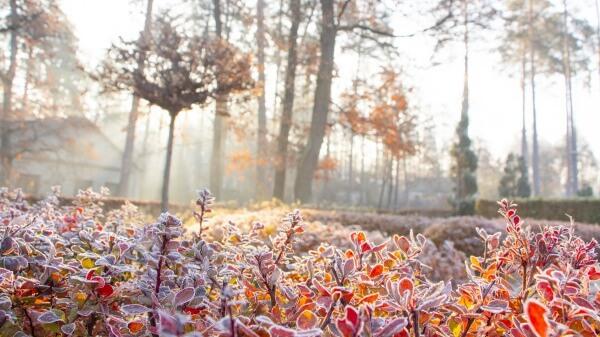Zur Wochenmitte verbreitet Frost