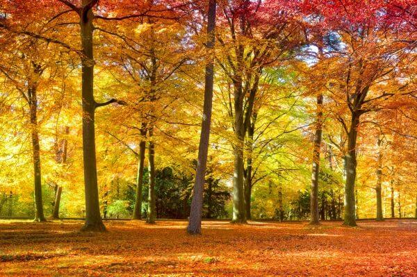 Der Goldene Oktober kommt