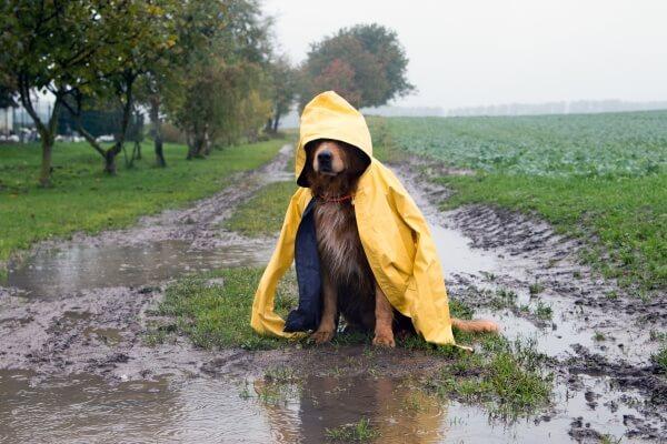 Lorenzo bringt Hundewetter