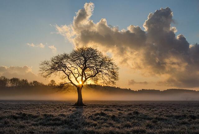 Typisches Bild im November: Nebel und Reif auf den Wiesen.