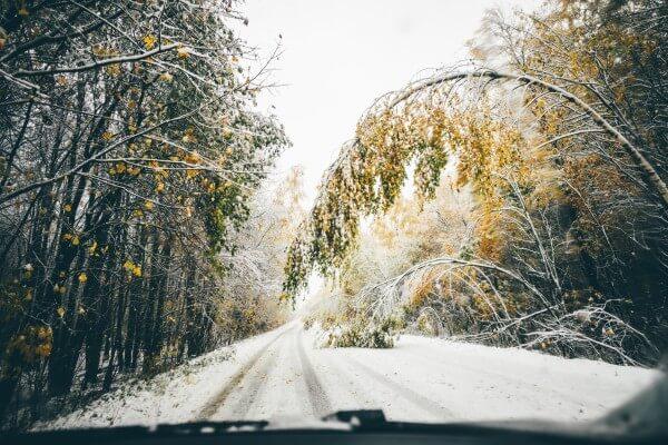 Schneebruch durch Nassschnee