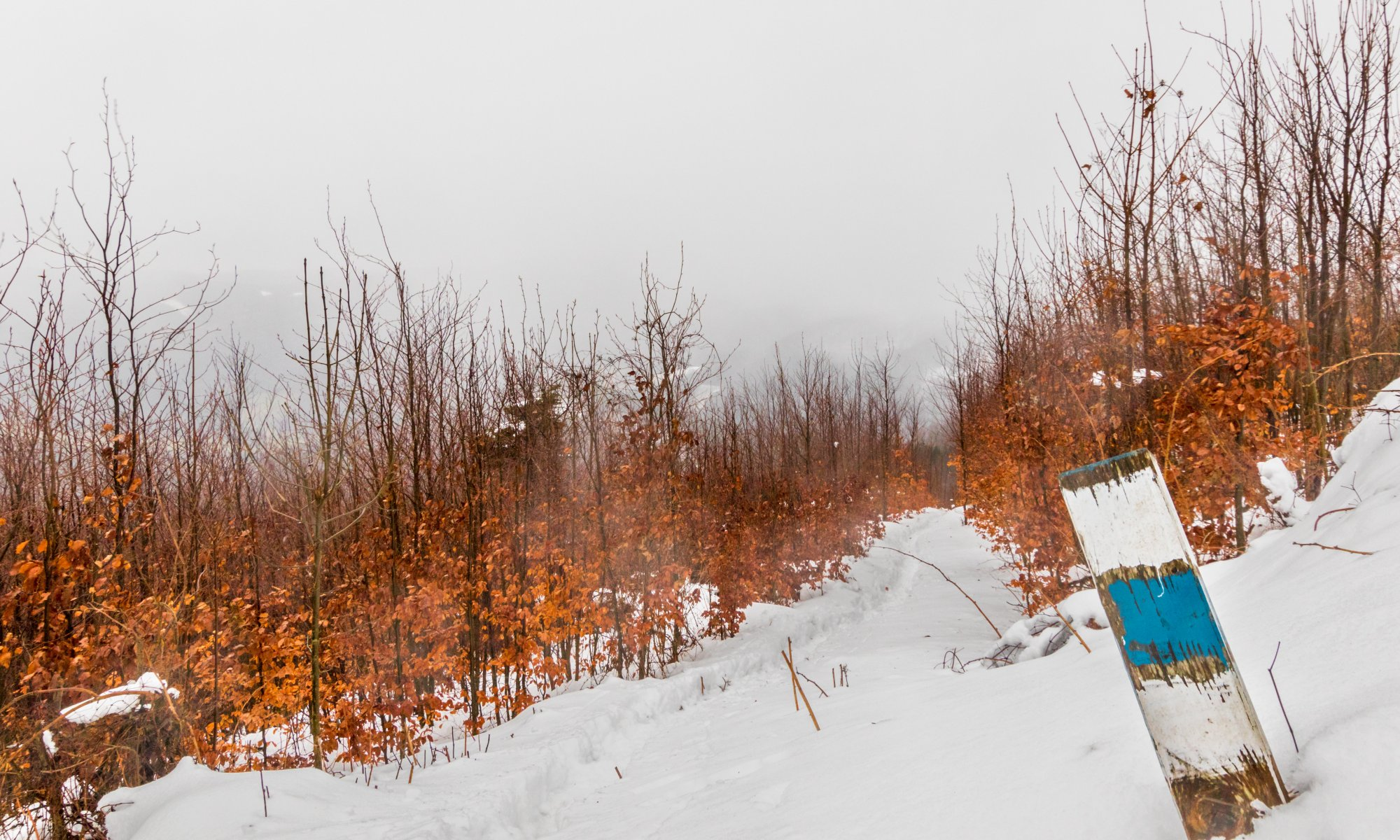 Schnee am Hocheck im Wienerwald. Quelle: Adobe Stock