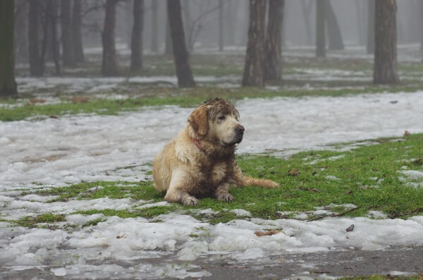 Hundewetter am Wochenende
