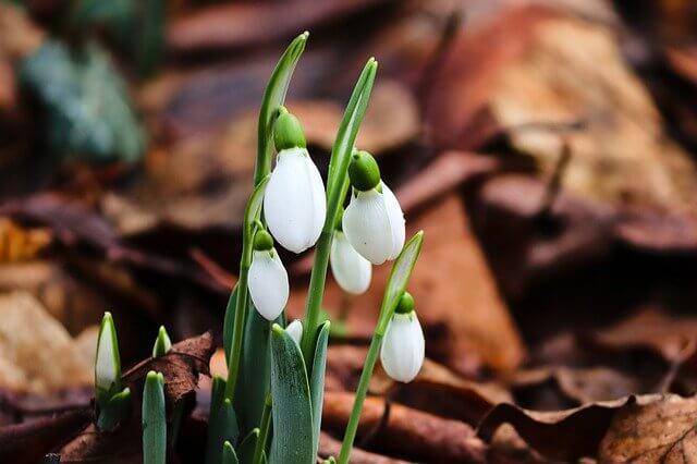 Frühling grüßt – bis zu 23 Grad am Montag