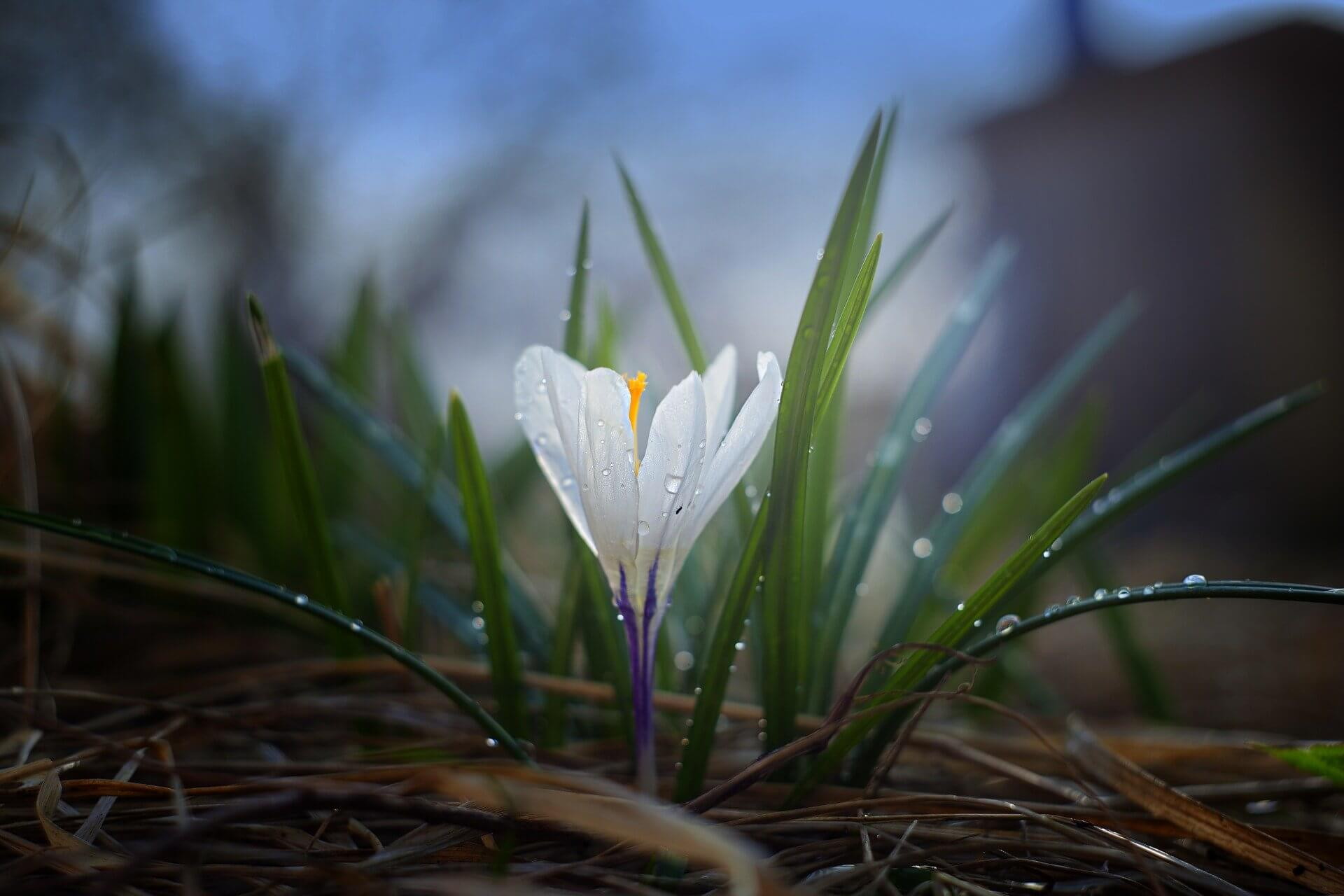 Meteorologischer Frühlingsanfang