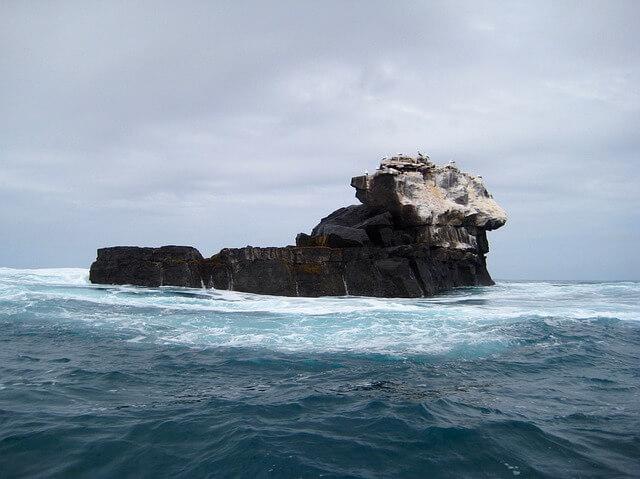 Artenreichtum dank Humboldtstrom auf den Galapagos-Inseln.