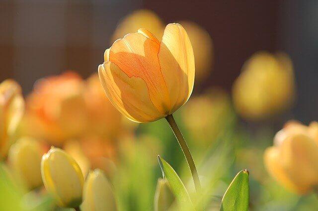 Am Freitag ist astronomischer Frühlingsbeginn