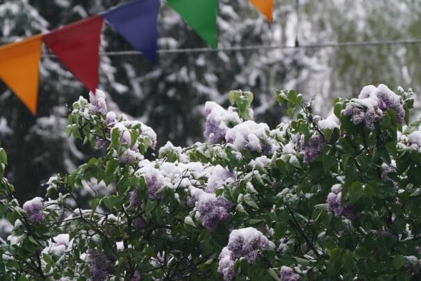 Schnee auf Laubbaum