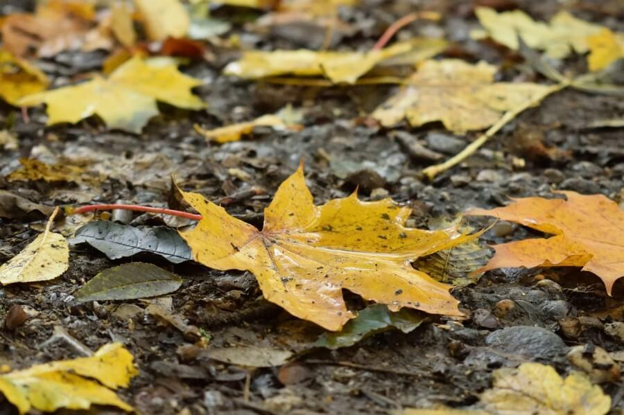 Regenwetter im Herbst