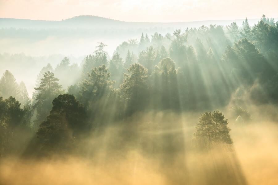 Optische Phänomene im Nebel