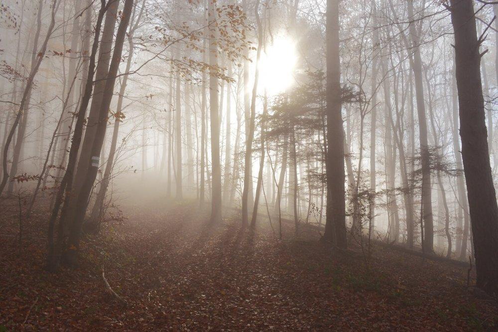 Hochnebel und Sonne: Zweigeteiltes Wetter setzt sich fort