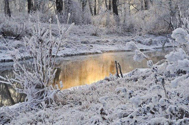 Reif und Schnee im Winter - Larisa-K / pixabay.com