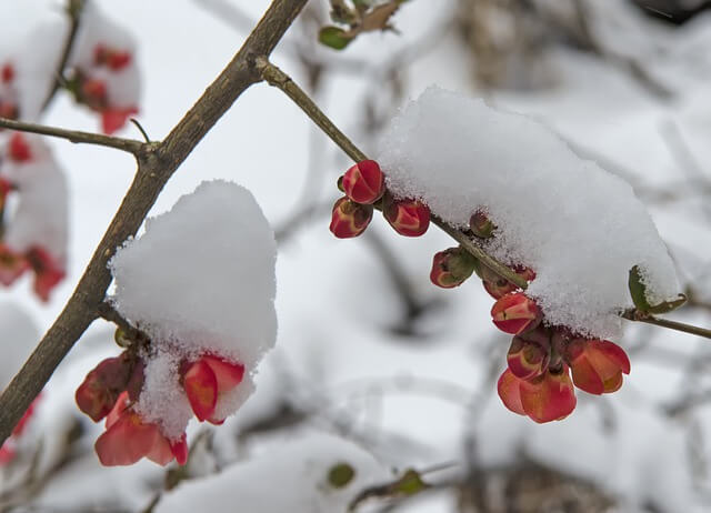 Schnee im Frühling - pixabay.com