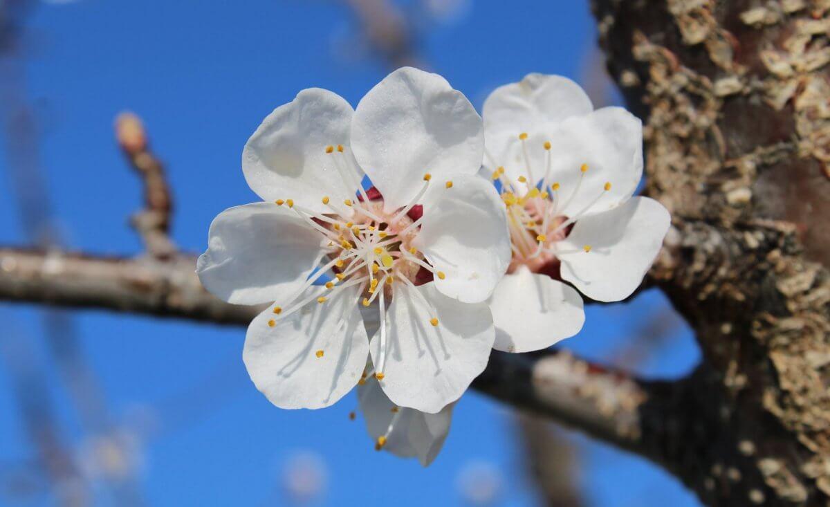 Phänologischer Frühlingsbeginn: Wenn die Pflanzenwelt erwacht