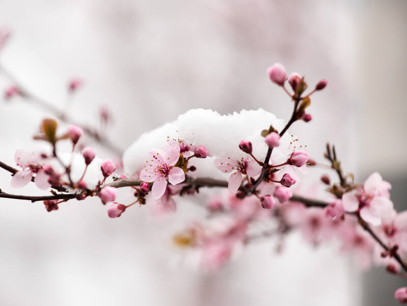 Frühling am Ostermontag, Winterrückfall am Dienstag