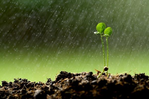Am Montag im Osten kräftiger Regen