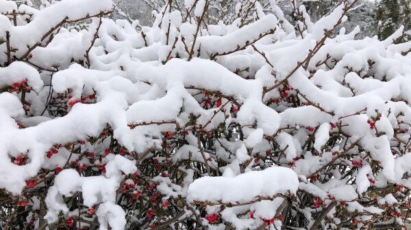 Frost und Schnee stehen vor der Tür