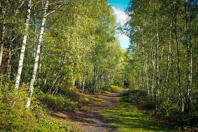 Waldweg im Spätsommer - pixabay.com