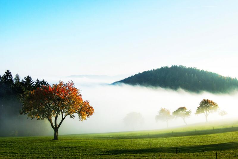 Herbstfarben über dem Nebelmeer © UBIMET/Matella